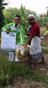 Ilustrasi: Uts. Abdurahim Arief, Pengurus Laz Sidogiri cabang Bekasi menerima kurban kambing